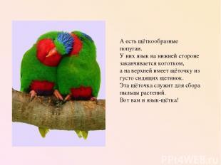 А есть щёткообразные попугаи. У них язык на нижней стороне заканчивается коготко