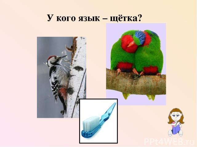 У кого язык – щётка?