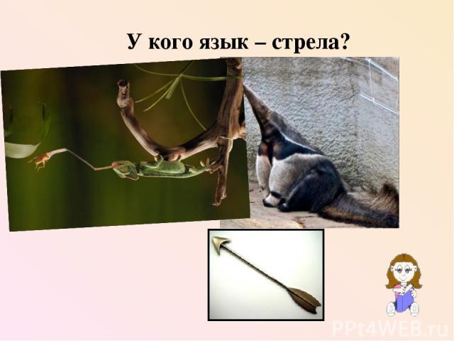 У кого язык – стрела?