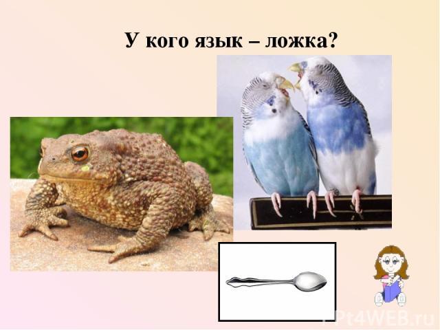 У кого язык – ложка?
