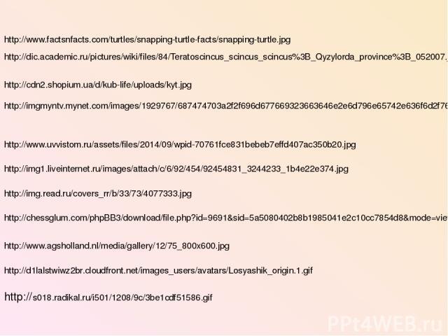 http://www.factsnfacts.com/turtles/snapping-turtle-facts/snapping-turtle.jpg http://dic.academic.ru/pictures/wiki/files/84/Teratoscincus_scincus_scincus%3B_Qyzylorda_province%3B_052007.jpg http://cdn2.shopium.ua/d/kub-life/uploads/kyt.jpg http://img…