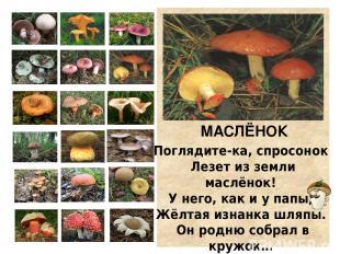 РЫЖИК К ёлке подойдём поближе. Видим гриб… Да это рыжик! Рыжий-рыжий, как морк