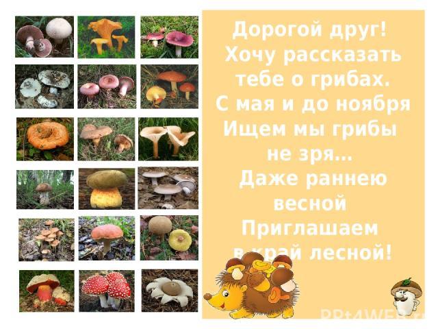 Дорогой друг! Хочу рассказать тебе о грибах. С мая и до ноября Ищем мы грибы не зря… Даже раннею весной Приглашаем в край лесной!