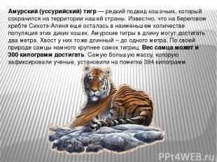 Амурский (уссурийский) тигр — редкий подвид кошачьих, который сохранился на терр