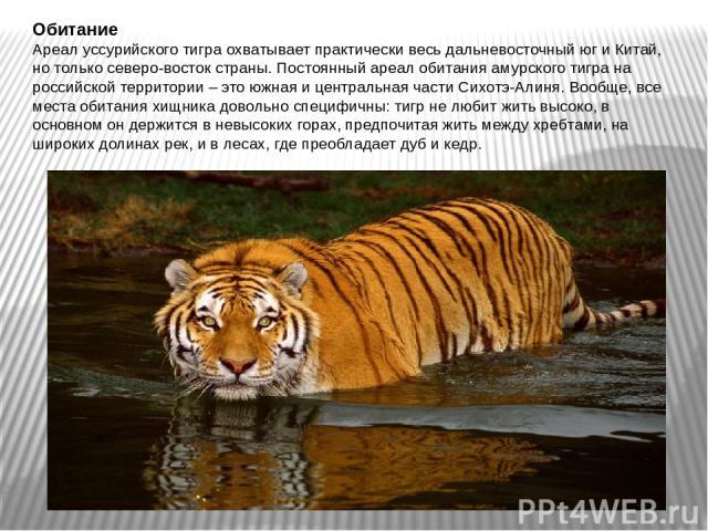 Обитание Ареал уссурийского тигра охватывает практически весь дальневосточный юг и Китай, но только северо-восток страны. Постоянный ареал обитания амурского тигра на российской территории – это южная и центральная части Сихотэ-Алиня. Вообще, все ме…