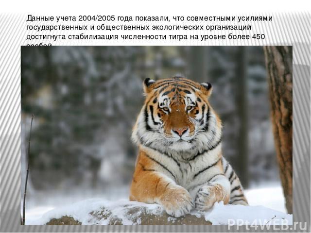 Данные учета 2004/2005 года показали, что совместными усилиями государственных и общественных экологических организаций достигнута стабилизация численности тигра на уровне более 450 особей