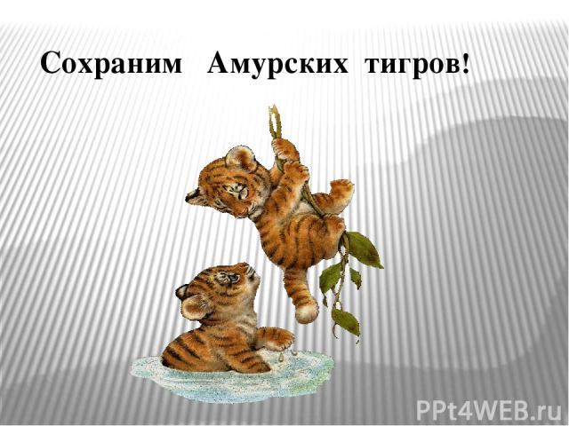 Сохраним Амурских тигров!