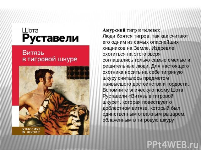 Амурский тигр и человек Люди боятся тигров, так как считают его одним из самых опаснейших хищников на Земле. Издревле охотиться на этого зверя соглашались только самые смелые и решительные люди. Для настоящего охотника носить на себе тигриную шкуру …