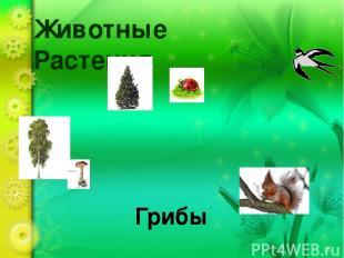Животные Растения Грибы