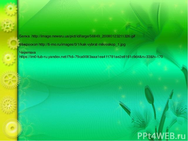 Белка http://image.newsru.ua/pict/id/large/56849_20080123211326.gif Микроскоп http://ti-mo.ru/images/0/1/kak-vybrat-mikroskop_1.jpg Черепаха https://im0-tub-ru.yandex.net/i?id=79ca9083aaa1ea411781ae2e8161c9d4&n=33&h=170