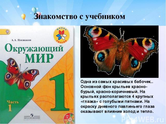 .Знакомство с учебником Одна из самых красивых бабочек.. Основной фон крыльев красно-бурый, красно-коричневый. На крыльях располагаются 4 крупных «глазка» с голубыми пятнами. На окраску дневного павлиньего глаза оказывают влияние холод и тепло.