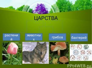 ЦАРСТВА растений животных грибов бактерий