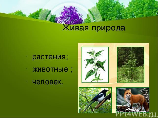 Живая природа растения; животные ; человек.