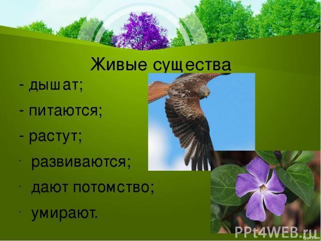 Живые существа - дышат; - питаются; - растут; развиваются; дают потомство; умирают.