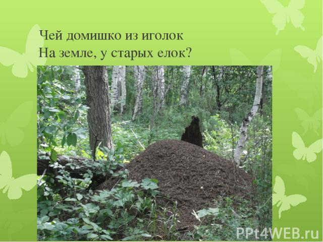 Чей домишко из иголок На земле, у старых елок?