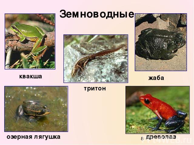 Земноводные квакша древолаз жаба тритон озерная лягушка
