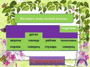 Какие из перечисленных растений растут в тайге? вишня кедр ель ольха пихта сосна
