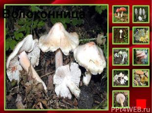 Фон Мухомор Перечный гриб Белая поганка Бледная поганка Волоконница Гриб желчный