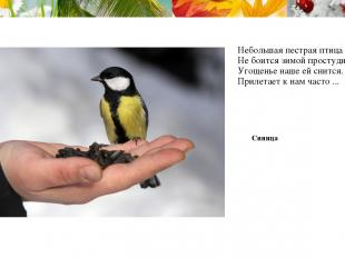 Небольшая пестрая птица Не боится зимой простудиться, Угощенье наше ей снится. П