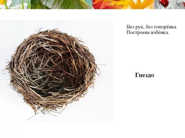 Без рук, без топорёнка Построена избёнка. Гнездо