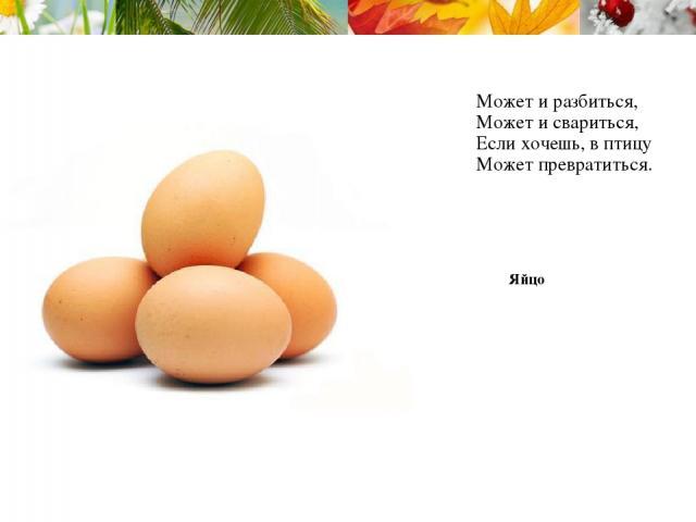 Может и разбиться, Может и свариться, Если хочешь, в птицу Может превратиться. Яйцо