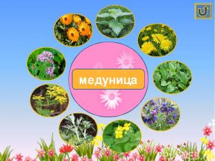 Лекарственные растения Автор-Костенко Наталья Владимировна, учитель начальных кл