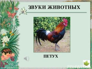 http://derhaos.ru/wp-content/uploads/2010/12/bereza346jpg_thumb.jpg - изображени