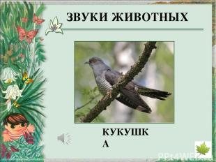 http://www.marinar.ru/uploads/posts/2013-04/thumbs/1365163123_zvedchataja_kambal