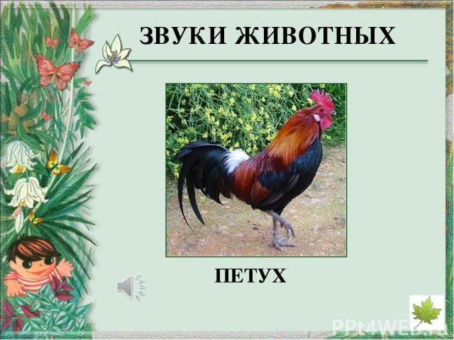 http://derhaos.ru/wp-content/uploads/2010/12/bereza346jpg_thumb.jpg - изображение берёзы http://narodmed.ucoz.net/_si/1/29800415.jpeg - изображение ели http://www.ecocaselegno.com/images/il_legno_2.jpg - изображение сосны http://xn--90abhobmqibeuieq…
