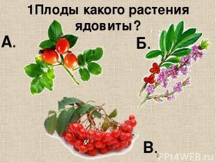 1Плоды какого растения ядовиты? В. Б. А.