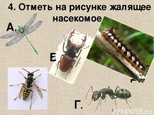 4. Отметь на рисунке жалящее насекомое. А. Б. В. Д. Г.