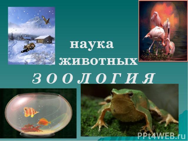наука о животных З О О Л О Г И Я