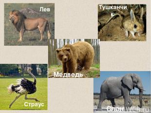 Страус Тушканчик Слон Лев Медведь