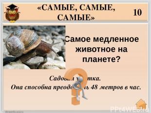 Самое умное животное на Земле? 30 «САМЫЕ, САМЫЕ, САМЫЕ» Шимпанзе , вслед за ним