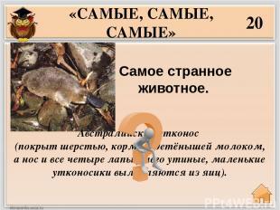 40 Самые высоко летающие птицы в мире?  «САМЫЕ, САМЫЕ, САМЫЕ» Горные гуси. Они