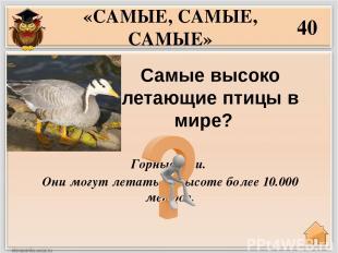 Синий кит – http://www.rasse1.com/wp-content/uploads/2012/01/%D0%BC%D0%BE%D1%80%
