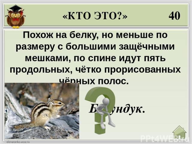 10 Почему кролики постоянно что-нибудь жуют? Чтобы стачивать зубы. «ПОЧЕМУ? КОГДА? КАК? ЧТО? ГДЕ?»