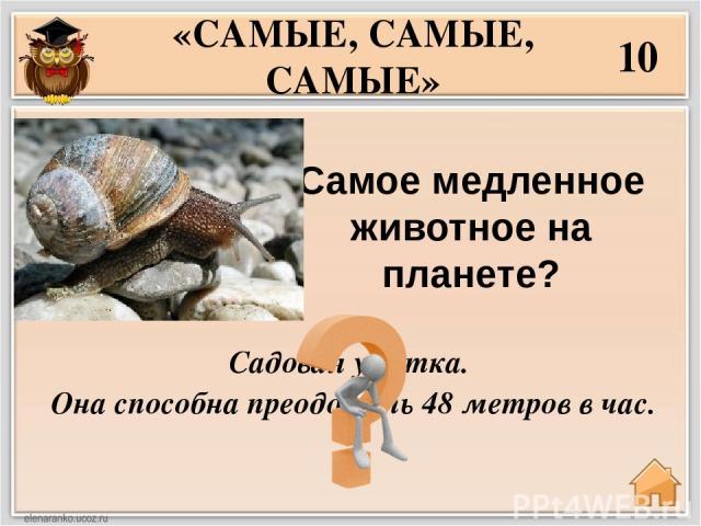 Самое умное животное на Земле? 30 «САМЫЕ, САМЫЕ, САМЫЕ» Шимпанзе , вслед за ним идёт дельфин.