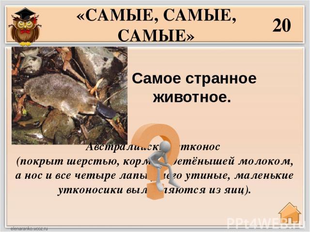 40 Самые высоко летающие птицы в мире?  «САМЫЕ, САМЫЕ, САМЫЕ» Горные гуси. Они могут летать на высоте более 10.000 метров.
