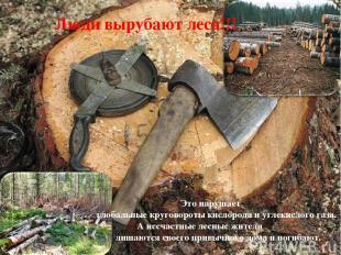 Люди вырубают леса!!! Это нарушает глобальные круговороты кислорода и углекислог