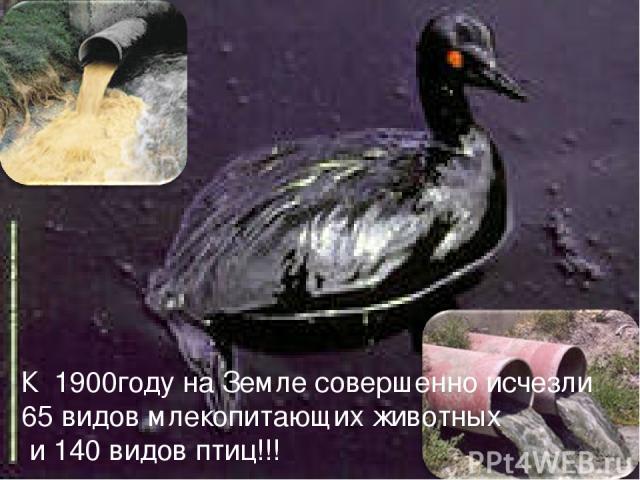 К 1900году на Земле совершенно исчезли 65 видов млекопитающих животных и 140 видов птиц!!!