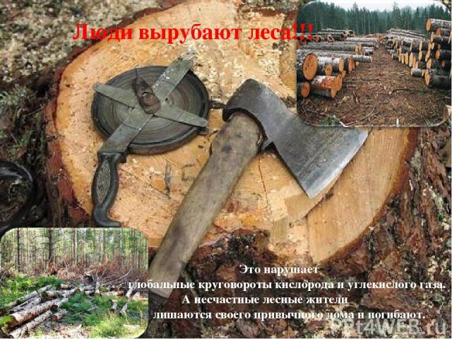 Люди вырубают леса!!! Это нарушает глобальные круговороты кислорода и углекислого газа. А несчастные лесные жители лишаются своего привычного дома и погибают.