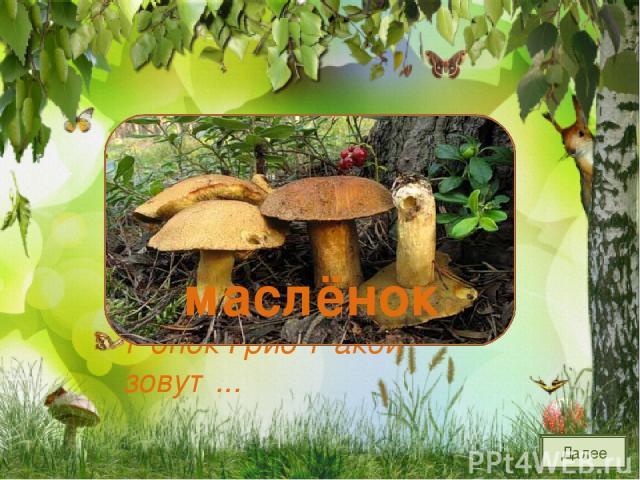 Шоколадно-бурый гриб, К скользкой шляпке лист прилип. Воротник ажурный тонок Гриб такой зовут... маслёнок Далее