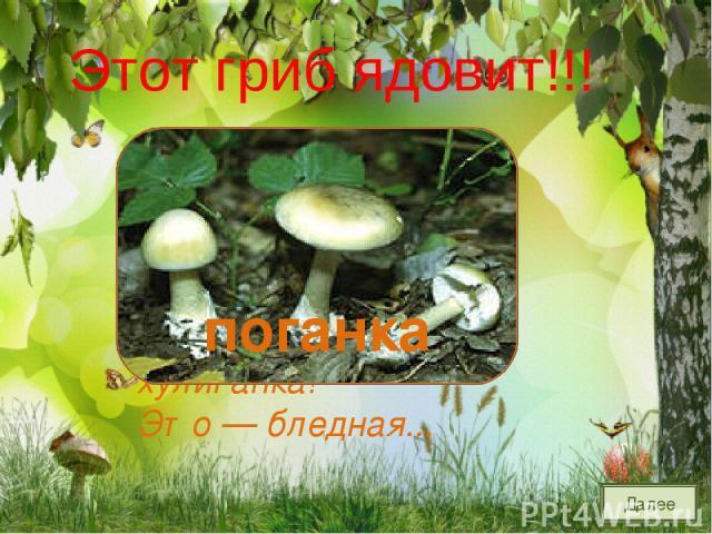 На грибы она сердита И от злости ядовита. Вот лесная хулиганка! Это — бледная... поганка Далее Этот гриб ядовит!!!