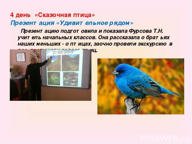 4 день «Сказочная птица» Презентация «Удивительное рядом» Презентацию подготовила и показала Фурсова Т.Н. учитель начальных классов. Она рассказала о братьях наших меньших - о птицах, заочно провели экскурсию в лес, послушали голоса птиц.