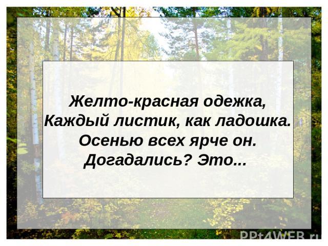 Желто-красная одежка, Каждый листик, как ладошка. Осенью всех ярче он. Догадались? Это...