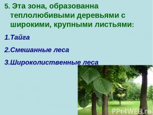 5. Эта зона, образованна теплолюбивыми деревьями с широкими, крупными листьями: