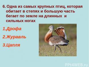 6. Одна из самых крупных птиц, которая обитает в степях и большую часть бегает п