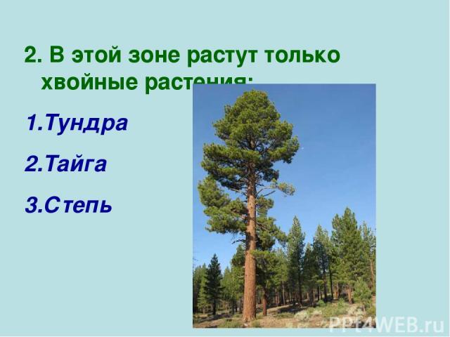 2. В этой зоне растут только хвойные растения: Тундра Тайга Степь