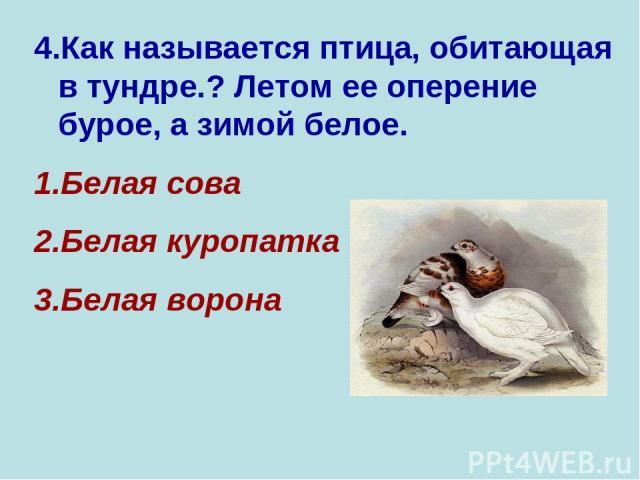 4.Как называется птица, обитающая в тундре.? Летом ее оперение бурое, а зимой белое. Белая сова Белая куропатка Белая ворона